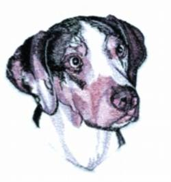 catahoula leopard dog in Clothing,