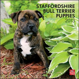 Staffordshire Bull Terrier Puppies 2013 Wall Calendar