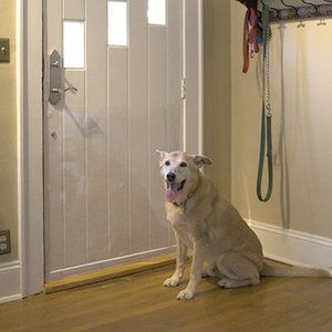 Cardinal Gates DRS Pet Door Shield Scratch Protection