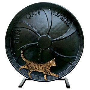 Cat Exercise Wheel for Bengal Cats  The Toy Go Round Cat Wheel