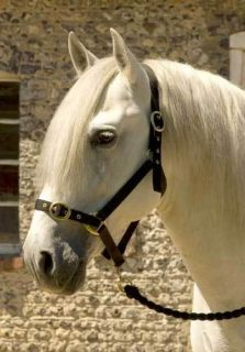 Horses Nylon Head Collar Shetland Pony COB Full Equestrian Supplies