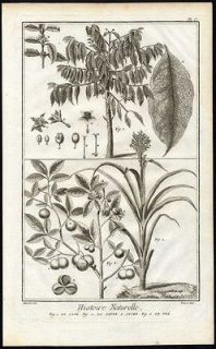 Antique Print Engravin g COFFEE PLANT SUGAR CANE TEA Dider ot 1751